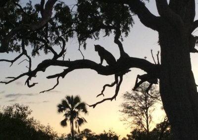 Beyond's Nxabega Okavango Delta Safari Camp