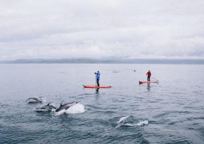 Nimmo-SUP-Dolphins-Jeremy-Koreski